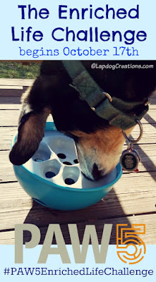 dog playing with food bowl