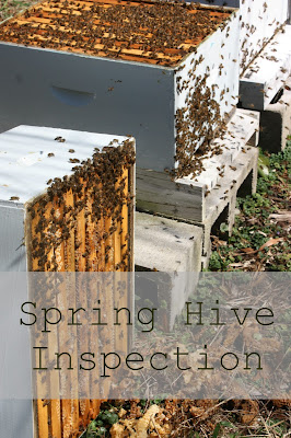 spring hive inspection