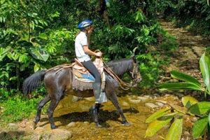 Hosterías en el oriente ecuatoriano - Hostería Hakuna Matata
