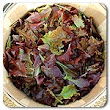 Organic Non-GMO Red Planet Lettuce Blend - OPEN-POLLINATED