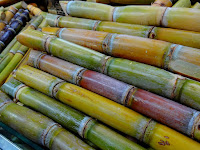 7 The Benefits of Sugarcane for Sweet Life
