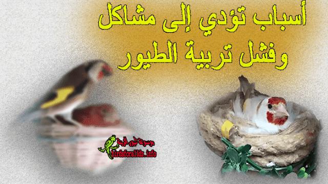 أسباب تؤدي إلى فشل تربية الحسون والكناري وبعض الطيور