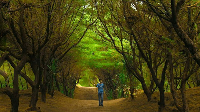Jogjalan-Jalan Ke : Goa Cemara Boy