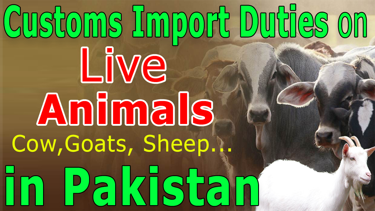 Customs-Import-Duties-live-Animals-Cow-Goats-Sheep-in-Pakistan