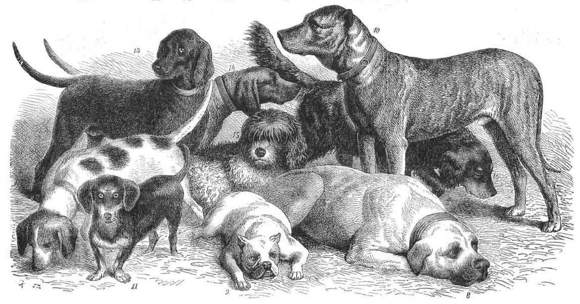 Fragmento de un grabado publicado en 1876