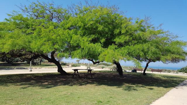 Parque de la Independencia, Tel Aviv, Yaffo, Israel, Elisa N, Blog de Viajes Argentina, Lifestyle