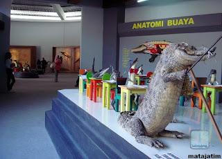 galeri buaya di predator fun park malang