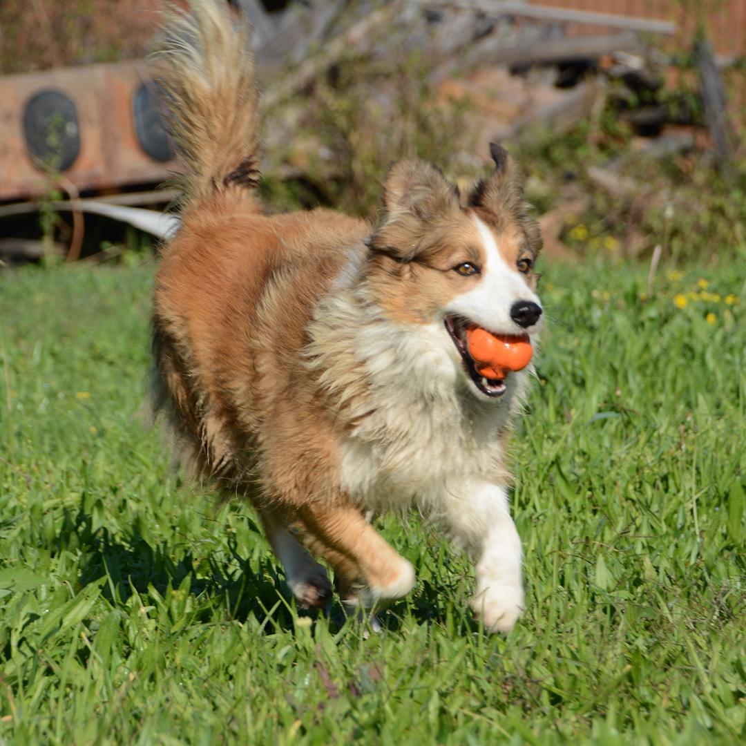 Tough Chew Toys For Dogs Australia