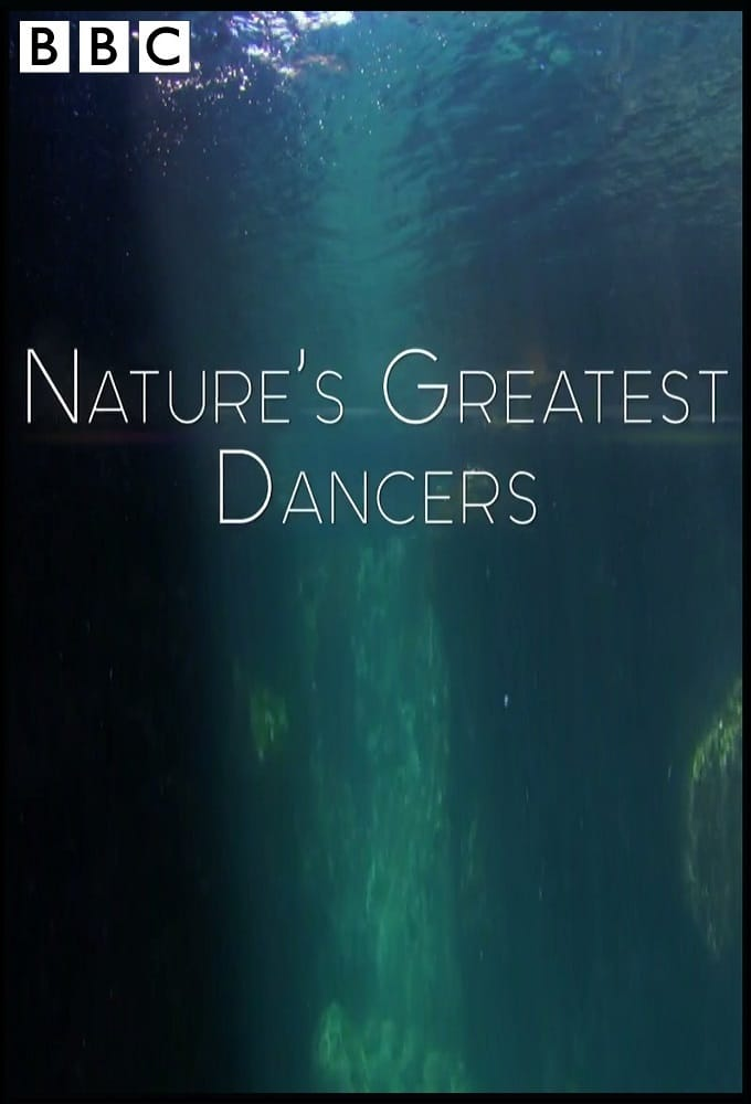 Những Vũ Công Cừ Khôi Của Tự Nhiên - Nature's Greatest Dancers