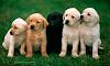Significado de soñar con perros