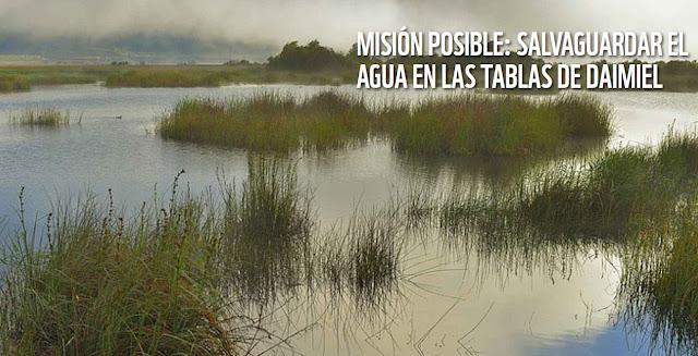 https://www.wwf.es/nuestro_trabajo_/agua/las_tablas_de_daimiel/