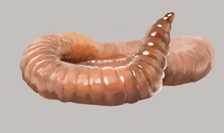 [Image: Worm.png]