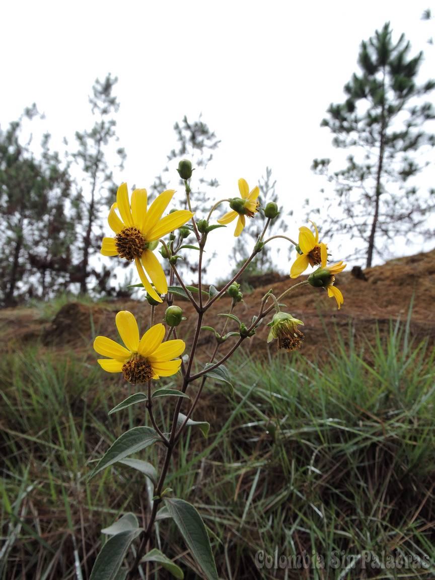 flores del cerro quitasol