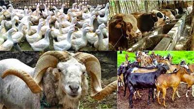 Sumber daya alam dari usaha peternakan