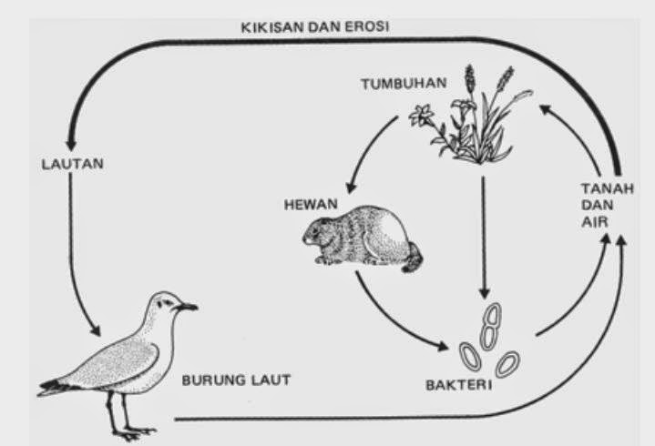 Daur sulfur, pengertian ekosistem, contoh ekosistem, rantai makanan ekosistem.