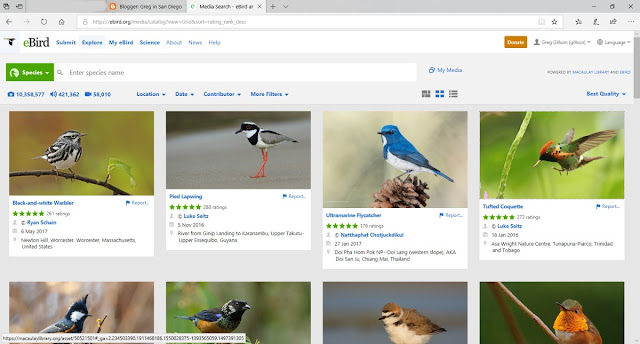 The world's highest rated photos in eBird.