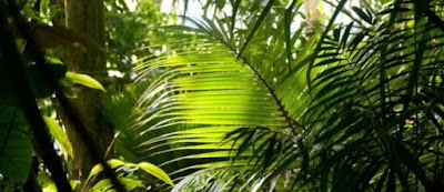 Plantas y bosque tropical