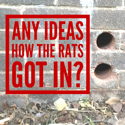 5 Easy Steps To A Rat Free Attic