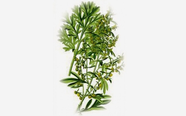 Το φυτό Αρτεμισία, στη μάχη κατά του καρκίνου