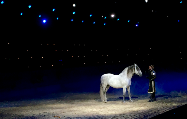 Medieval Times Toronto - Spanish Horse
