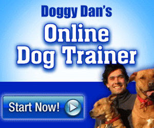 Doggy Dan's Online Dog Trainer - Check it out Now!