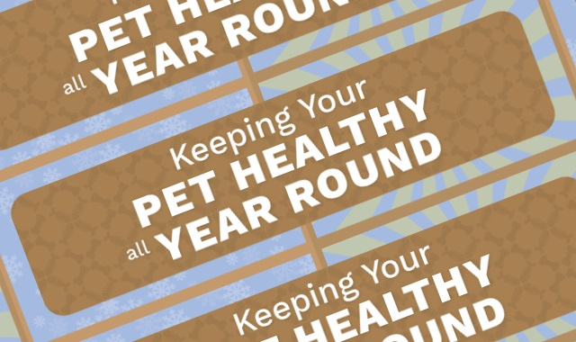 How to Keep Your Pet Healthy All Year Round