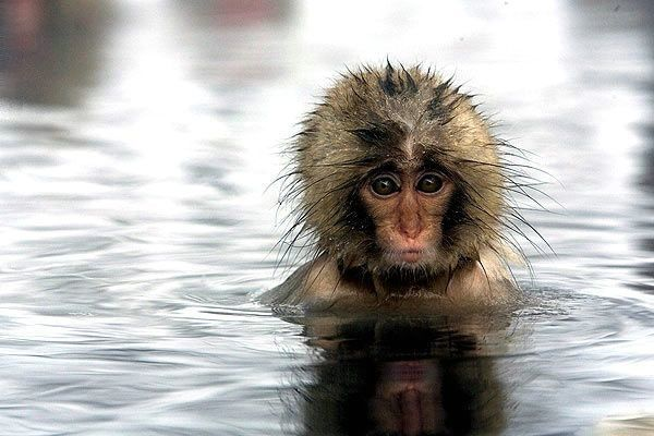 Cute Wallpapers Of All Kind Of Animals Latest Funny Pictures Funny Monkey Faces Images