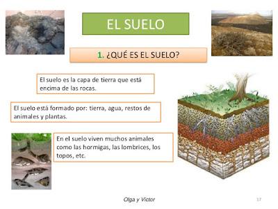 El suelo todo sobre el medio ambiente for Informacion sobre el suelo