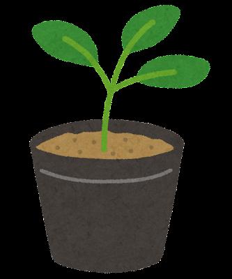 植物の苗のイラスト