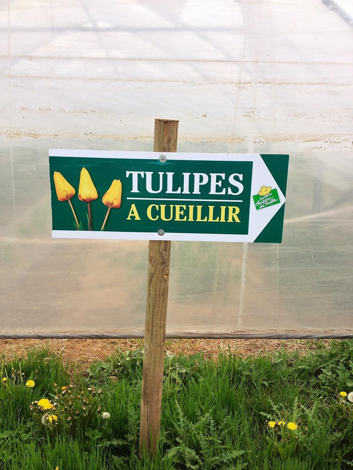 cueillette de tulipe à la ferme de Gally