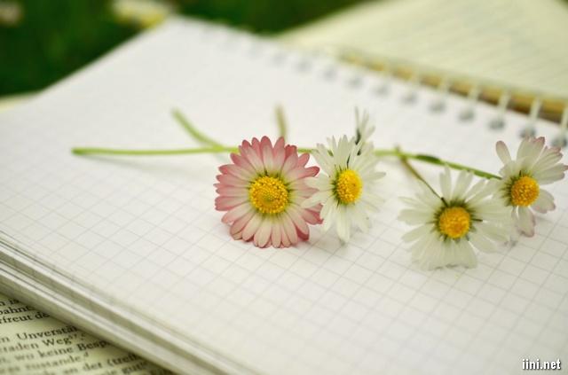 ảnh hoa bên trang sách