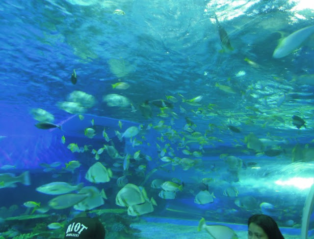 A school of fish at Manila Ocean Park oceanarium
