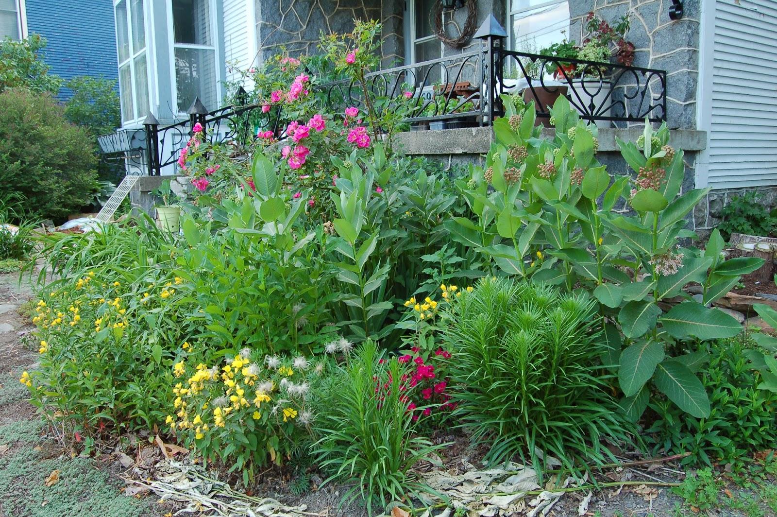 3 jardins au qu bec des plates bandes comestibles et for Catalogue de plantes vivaces