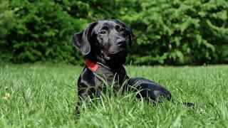 تفسير كلب اسود في المنام والحلم بكلب اسود يهاجمني بالتفصيل موقع باختصار