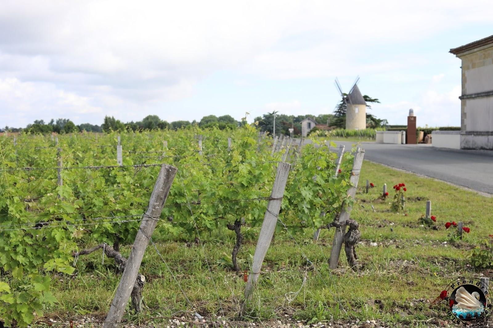 Visite et dégustations au Château Malescasse