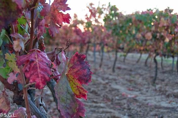 Otoño en el viñedo de Laguardia