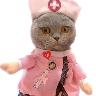 kucingmanja.com