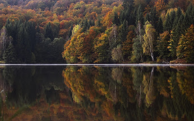 trees reflection in water widescreen hd wallpaper