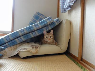 隙間から顔を出す猫