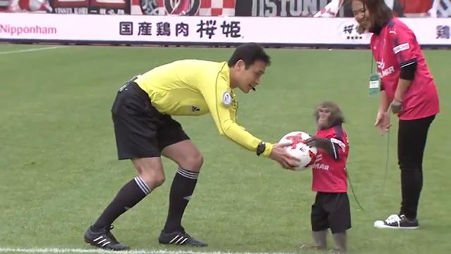 Laga Sepakbola Ini Diawali dengan... Monyet Beri Bola ke Wasit