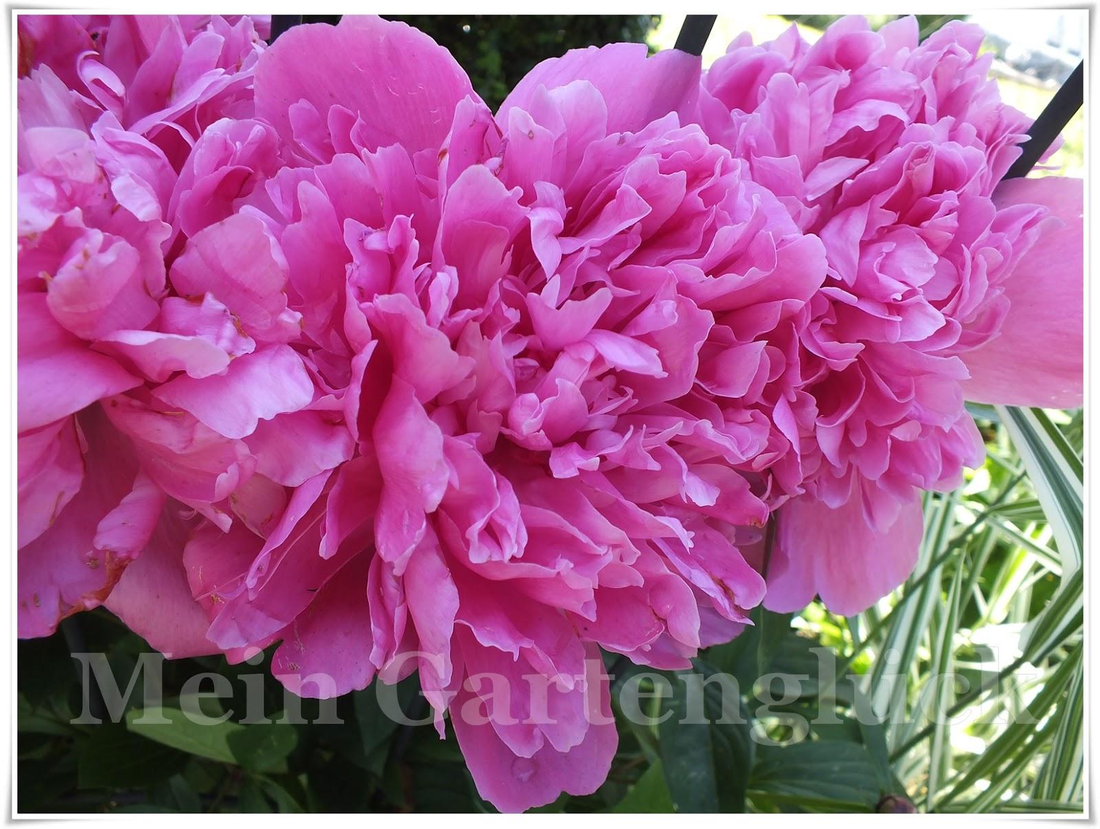 eine rose ist eine rose ist eine. Black Bedroom Furniture Sets. Home Design Ideas