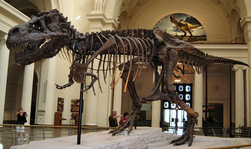 American Museum of natural history, New York, USA