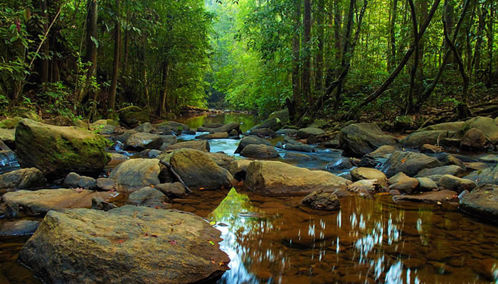 Travel With Me Sinharaja Rain Forest