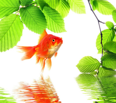 Letest full hd fish wallpaper desktop background | best hd wallpaper fish | HD Image fish | HD picks fish | Animals hd wallpaper | fish hd photos | hd wallpaper top