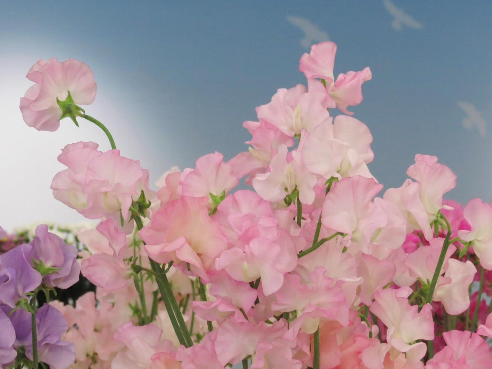 BANCO DE IMÁGENES: Nuevos Paisajes Con Flores Para