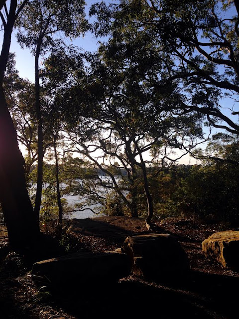 Mornings at Oatley Park