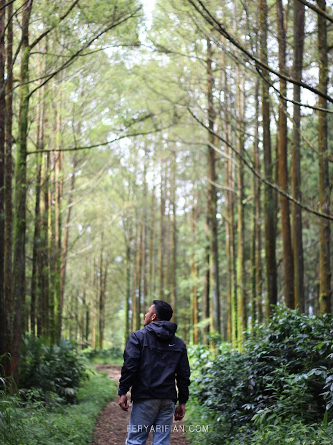 feryarifian travel blogger and food blogger malang - hutan pinus budug asu