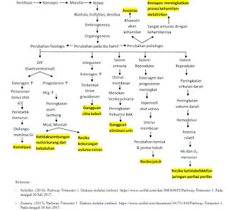 WOC kehamilan trimester 1, pathway kehamilan trimester 1, Diagnosa dan Intervensi Keperawatan Pada Kehamilan Trimester 1