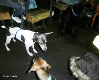 Los perros buenos pueden entrar en Café do bico