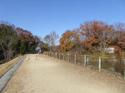 白旗池 イタドリの小路
